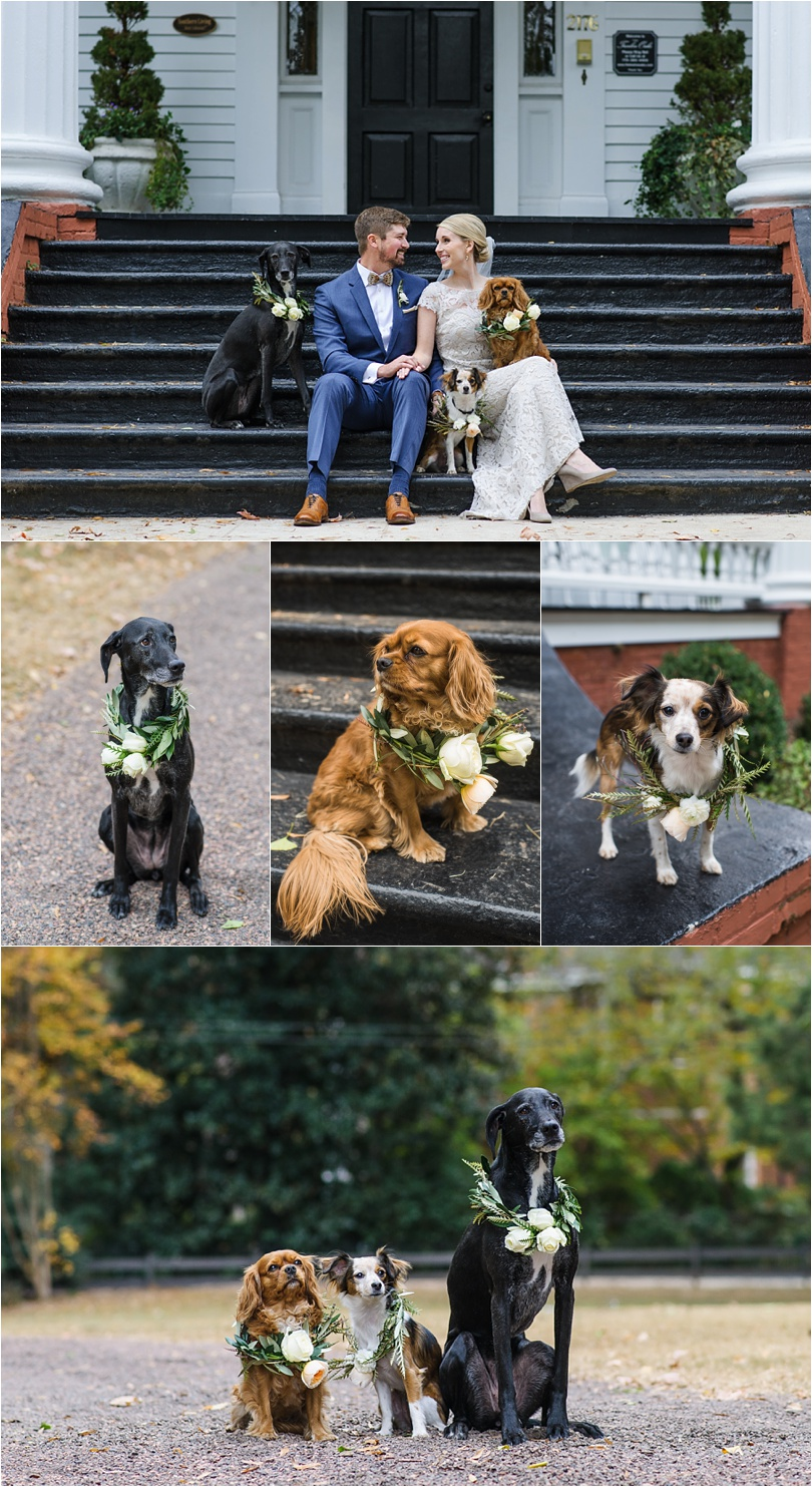 It's always a good idea to dress your dogs up for the wedding day too! The couple decided to make floral wreaths for their dogs, and it's so precious